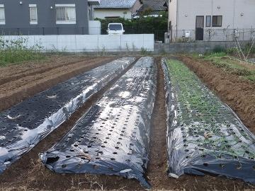 干支小物作りと玉ねぎ植え13