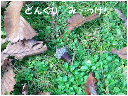 「秋」を見~っけ!