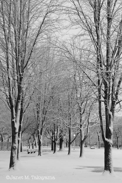 snowypark2.jpeg