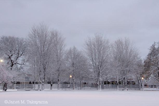 snowypark5.jpeg