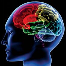 脳について