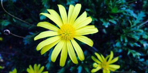 yellow_20151111145546548.jpg