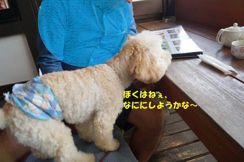 DSC04720_convert_20161014221651.jpg