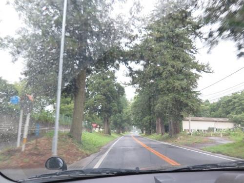 栃木 杉並木