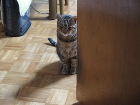家政婦は見たネコ
