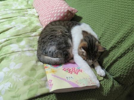 ごめん寝ネコ