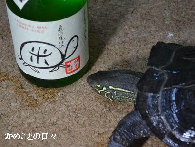 DSC_0085-sake.jpg
