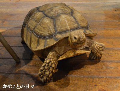 DSC_0344-ichi.jpg