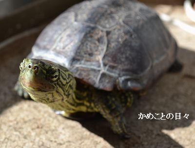 DSC_0808-suke.jpg