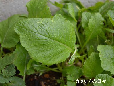 DSC_0910-ha.jpg