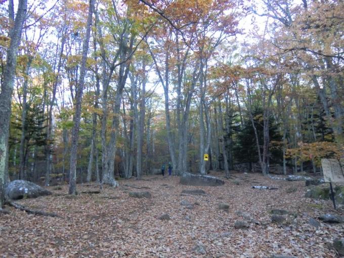歩き出しの森