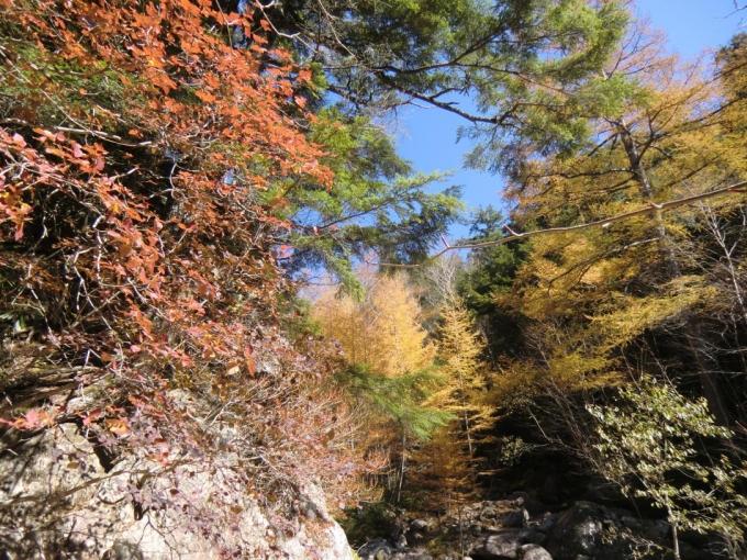 天鳥川の紅葉