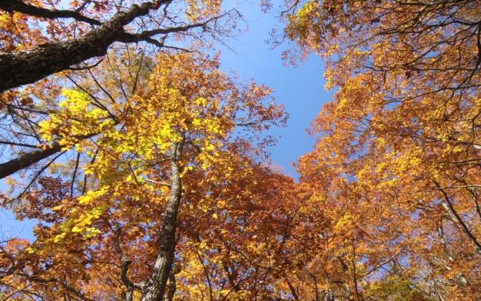 下山路の黄葉3