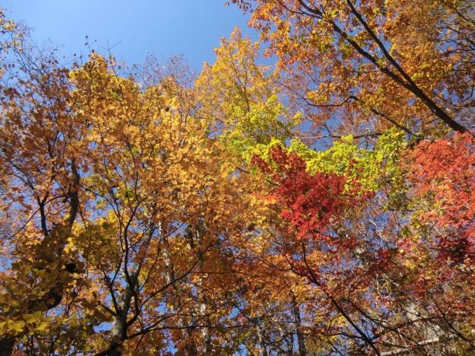下山路の黄葉6