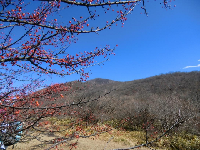 荒山高原でズミの実と荒山