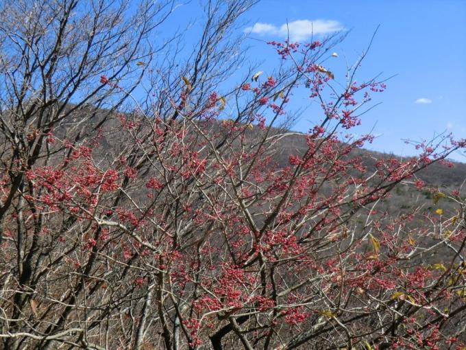 マユミと荒山