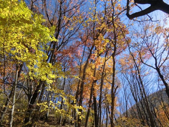 紅葉の森を1