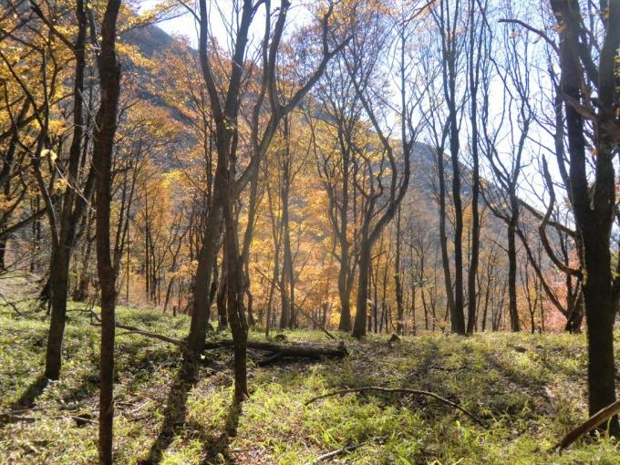 紅葉の森を2