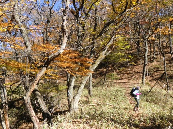 紅葉の森を3