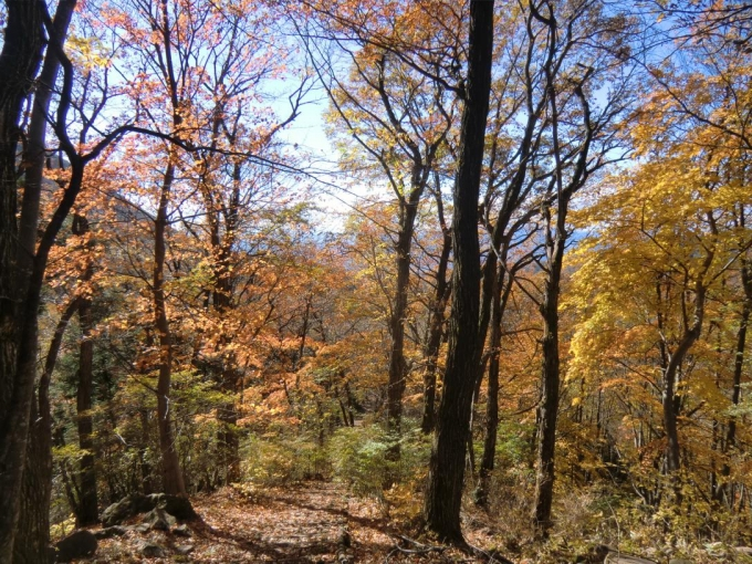 紅葉の森を4