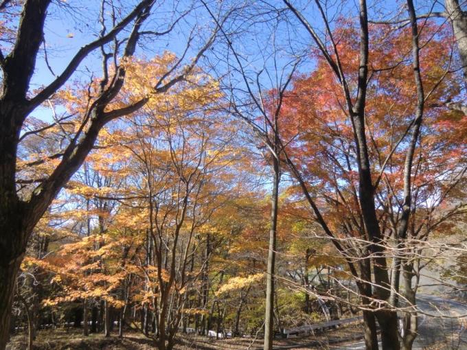 紅葉の森を6
