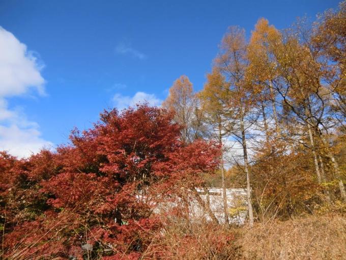 あかぎ木の家3
