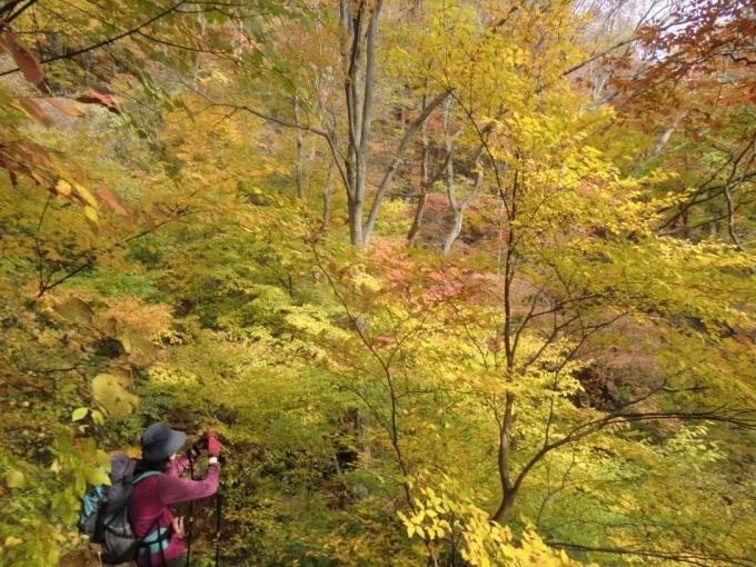 ここは黄葉があキレイ