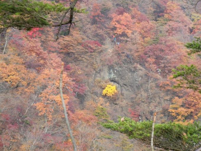 岩壁に紅葉