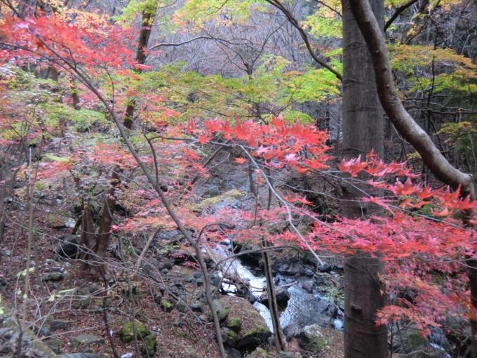 中木川の紅葉