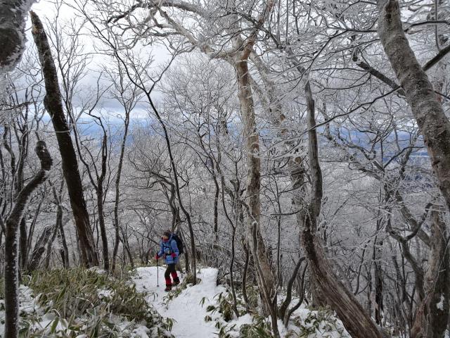 霧氷の森を