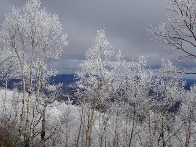山頂部の霧氷
