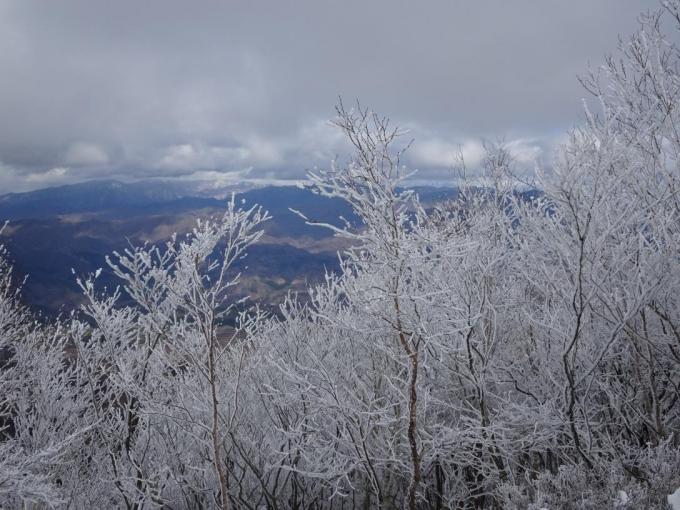 展望台の霧氷