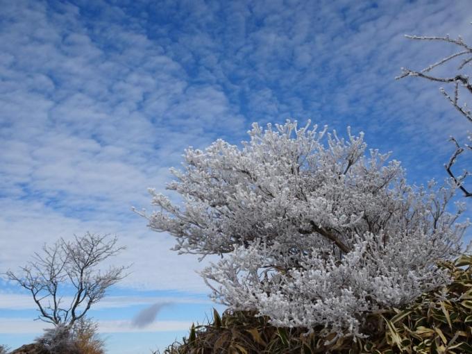 青空に霧氷