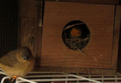 sf-nest.jpg