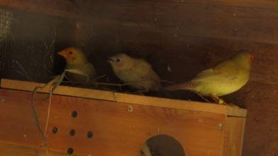 sf-nest2.jpg