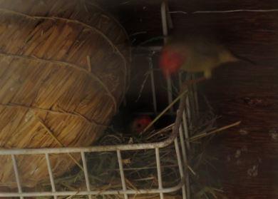 sf-nest3.jpg