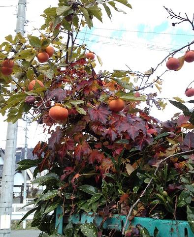 秋の花々 (2)