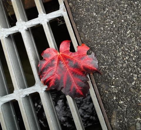 秋の花々 (3)