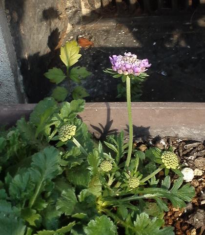 秋の花々 (4)