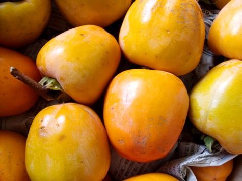 201501103 渋柿が来た! 007-2