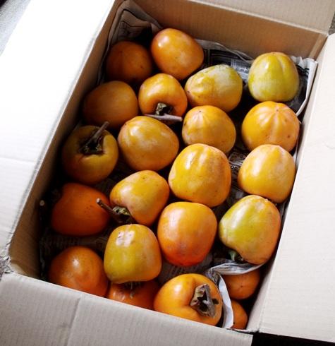 201501103 渋柿が来た! 004-2