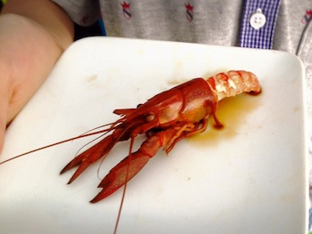 crayfish2.jpg