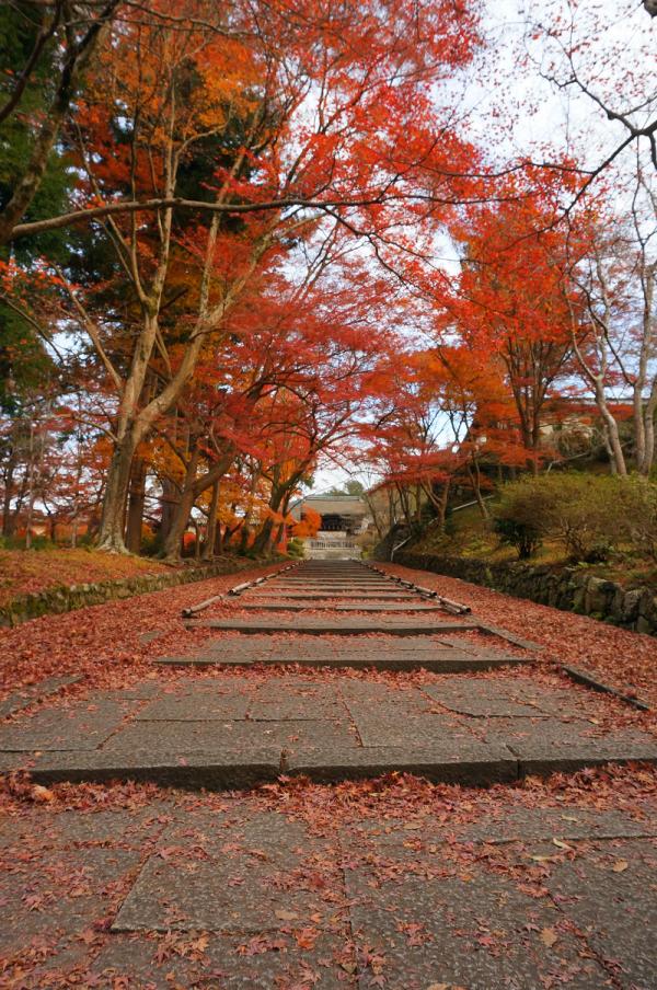 kosei no tabi 2015 03