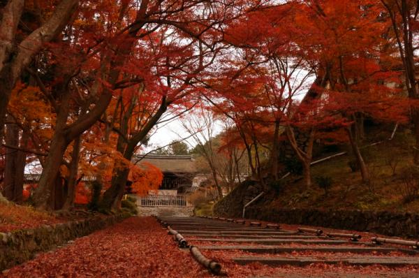 kosei no tabi 2015 05