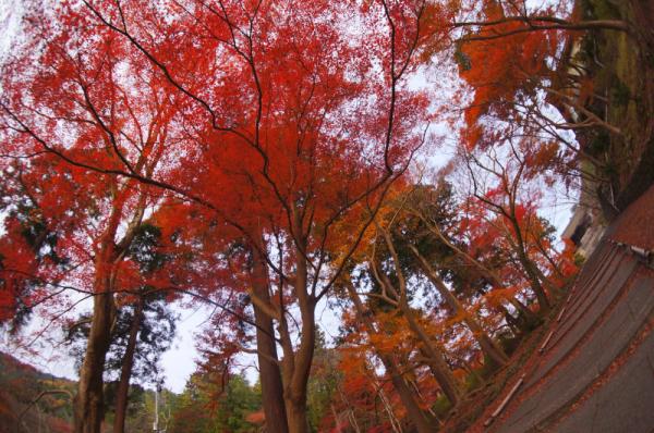 kosei no tabi 2015 07
