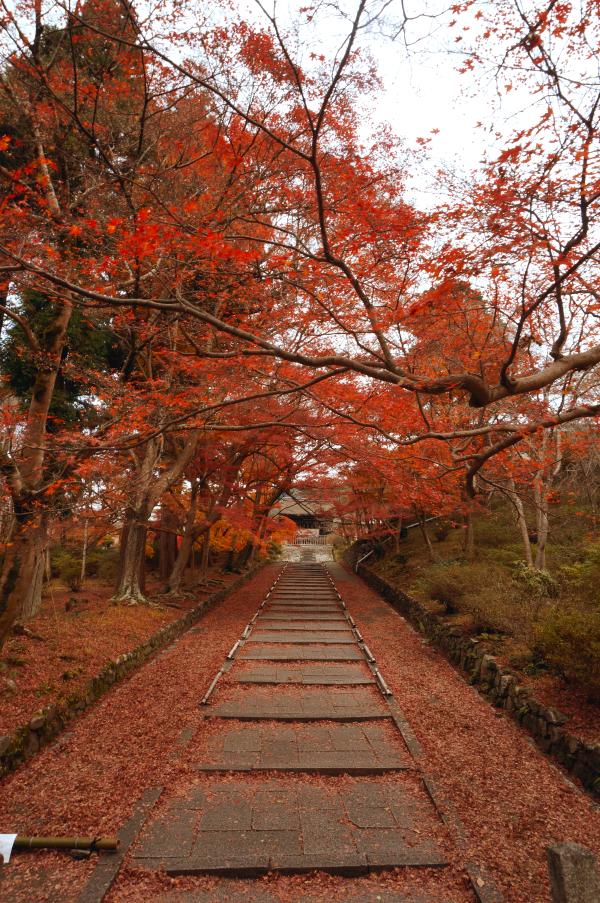 kosei no tabi 2015 10