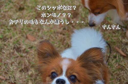 S1BW3MHT愛知公園2