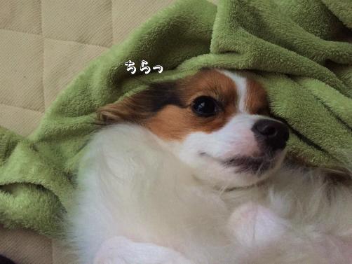 2i_XYQxa悪あがき3