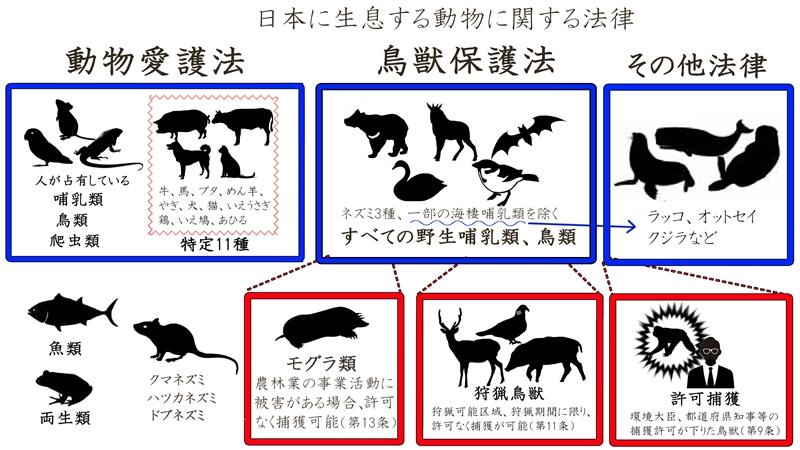 日本の動物4