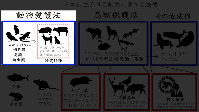 日本の動物123